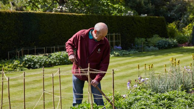 Sidney Gardener working in the Fellows' Garden